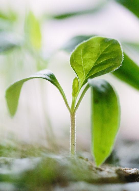 jardin partage jeune pousse